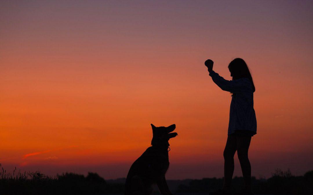 Faut-il encore croire aux mutuelles chien ?