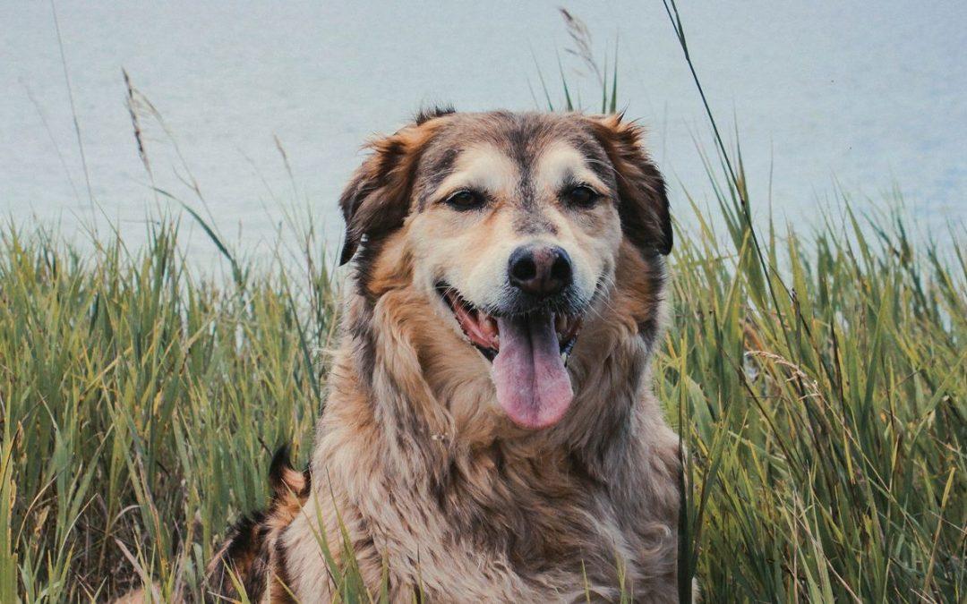 Comment identifier une bonne mutuelle chien?