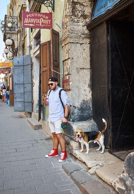 assurance-canine-pour-les-beagles
